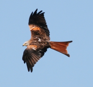 kites new 079