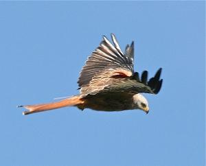 kites new 095